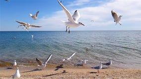 Frajery na plaży, grupa frajery na plaży zbiory wideo