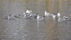 Frajery na wodzie jezioro w falach woda zbiory