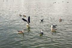 Frajery spławowi i odpoczywają na wodzie Obraz Royalty Free