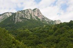Frakto国家森林,希腊 免版税库存照片