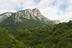 Frakto-staatlicher Wald, Griechenland Lizenzfreies Stockfoto