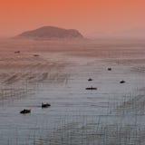 Fram de la alga marina Imagen de archivo libre de regalías