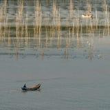 Fram dell'alga Fotografia Stock Libera da Diritti