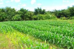 Fram foragriculture. In seson on mountain royalty free stock images