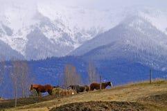 Fram scene in Winter, Columbia Falls, MT. Fram scene, Columbia Falls, Montana royalty free stock photography
