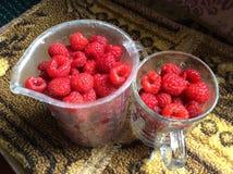 Framboesa fresca Foto de Stock