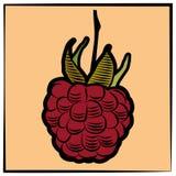 Framboesa-gravura-cor Imagens de Stock Royalty Free