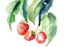 Framboesa, ilustração da aguarela Imagens de Stock Royalty Free