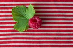 Framboesa no pano vermelho stripted Fotos de Stock