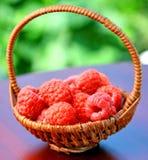 Framboesa orgânica fresca da fruta no fundo do jardim Imagens de Stock
