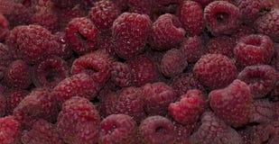 Framboesa suculenta fresca madura doce muito gosto excelente do verão foto de stock
