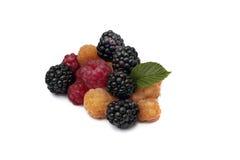 Framboesas de Blackberry, vermelhas e amarelas no fundo branco Fotos de Stock