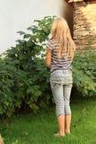 Framboesas de observação da menina Foto de Stock