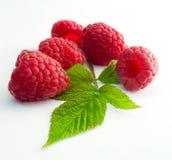 Framboesas frescas deliciosas da primeira classe Imagens de Stock