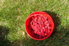 Framboesas frescas em um fundo da grama verde Imagens de Stock Royalty Free