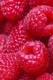 Framboesas maduras frescas Fotos de Stock Royalty Free
