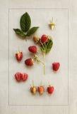 Framboesas no papel do vintage Ilustração botânica Foto de Stock Royalty Free