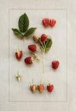 Framboesas no papel do vintage Ilustração botânica Imagem de Stock