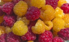 Framboesas orgânicas amarelas e vermelhas foto de stock royalty free