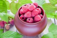 Framboesas orgânicas frescas Foto de Stock