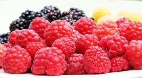 Framboesas vermelhas de frutos frescos e outras bagas Fotos de Stock