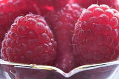 Framboise Photo stock