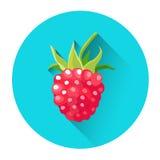 Framboise Berry Icon coloré Image stock
