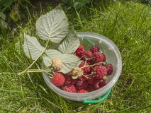 Framboise douce Photo libre de droits