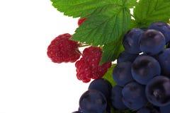 Framboise et fruit de raisins Photographie stock libre de droits