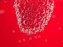 Framboise fraîche avec des bulles Image libre de droits