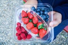 framboise fraîche de myrtille de fraise dans le paquet dans la main de l'homme Images libres de droits