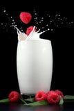 Framboises éclaboussant dans le lait Photographie stock libre de droits