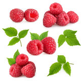 Framboises d'isolement Images stock
