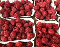 Framboises fraîches images stock