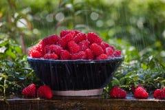 Framboises fraîches sous la pluie Photo stock
