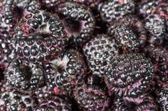 Framboises noires fraîches dans des boîtes Image libre de droits