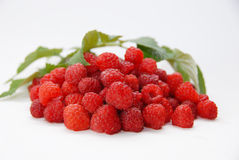 Framboises rouges Photo stock