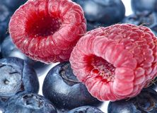 Framboises rouges aériennes et myrtilles bleu-foncé sur un substrat léger photo stock