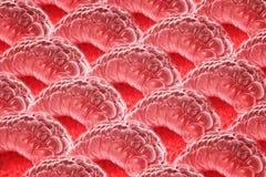 Framboises rouges aériennes et myrtilles bleu-foncé sur un substrat léger photo libre de droits
