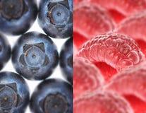 Framboises rouges aériennes et myrtilles bleu-foncé sur un substrat léger images stock
