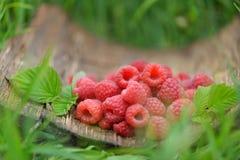Framboises rouges fraîches sur le fond naturel brouillé photographie stock