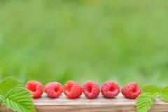 Framboises rouges fraîches sur le fond naturel brouillé photo libre de droits
