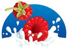 Frambozen die in melk bespatten Stock Afbeelding