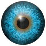 Frambragd hyratextur för öga iris Fotografering för Bildbyråer