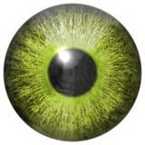 Frambragd hyratextur för öga iris Royaltyfri Fotografi