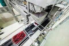 Frambuesa congelada que procesa negocio fotografía de archivo
