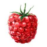 Frambuesa roja madura fresca, baya jugosa dulce con la hoja verde, alimento biológico, primer, aislado, acuarela exhausta de la m imagenes de archivo