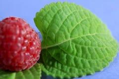 Frambuesa y hoja verde Imagen de archivo libre de regalías