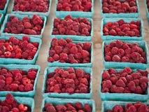 Frambuesas frescas Imagen de archivo