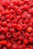 Frambuesas frescas Comida-fondo Foco selectivo Imagen de archivo